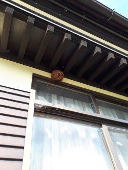 蜂の巣駆除!!